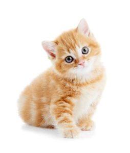 159706-357x421-kitten